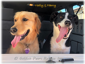 Holly and Harry Sept 2020 (1).png