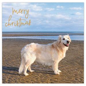 2021 Christmas Card - Sophie.jpg