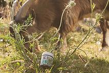 goat-sm.jpg