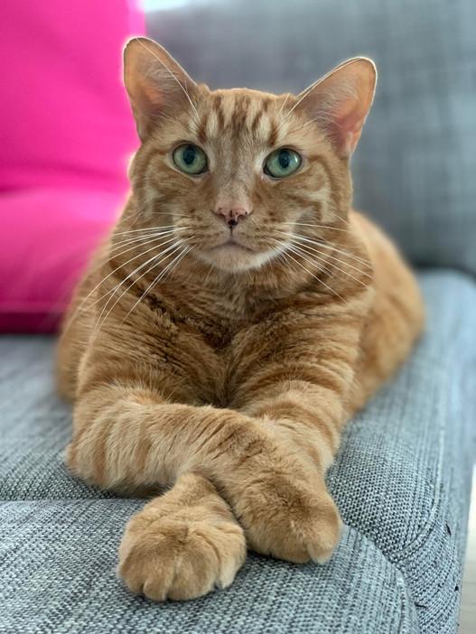 Cat Piękny