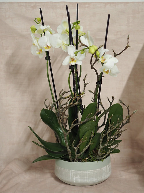 Orchid Gift Planter