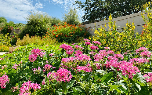 Summer Market @ San Antonio Botanical Gardens - July 18, 2021