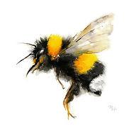 qrate bee (2)-min.jpg