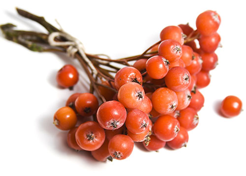 Rowan (fruit)