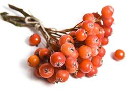 Rowan (fruit)