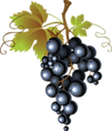 виноград (23).png