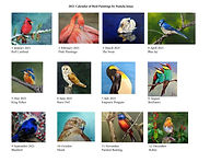 Contact Sheet of all Bird Paintings for Each Month