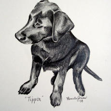 Tippin as a Puppy