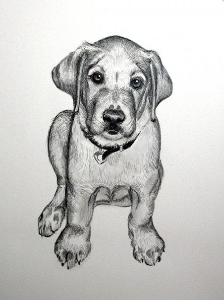 Gomez as a Puppy