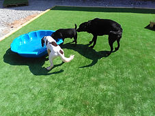 cheshire tails dog daycare