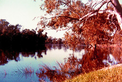 Murray River Reflections