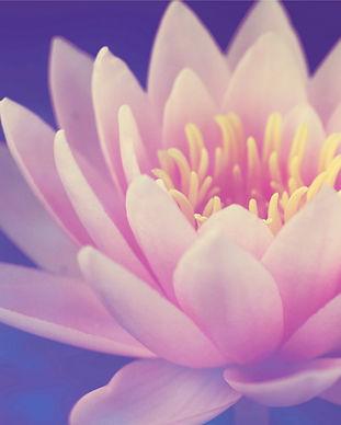 Principles of mindfulness, by Dr Liza Chervonsky at Inlight Psychology, in Bondi Junction