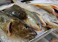 fresh cod, sole, flounder, king salmon