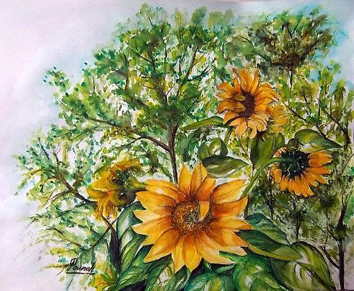 sun flowers