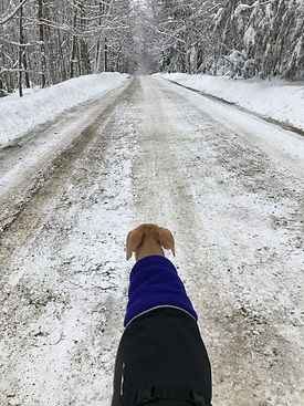 Chilly Dog Sierra.JPG