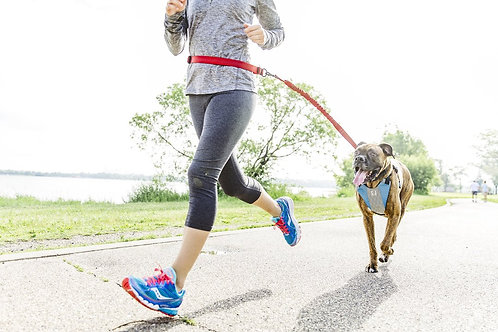 Go Dog Glo Running Harness