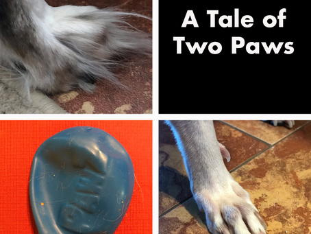 A Tale of Two Paws