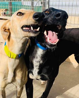 GDS dogs.jpg