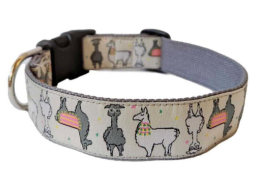 Mango Street Dog Collar