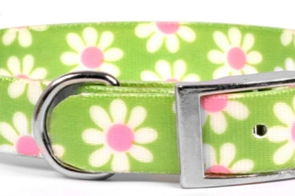 Daisy Elements Dog Collar