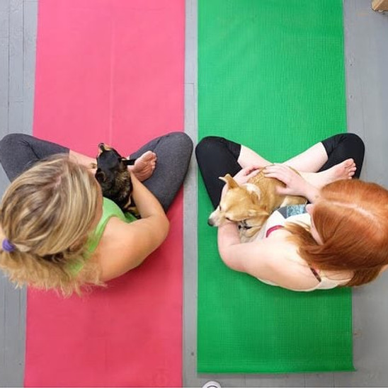 International (Dog) Yoga Day Q&A and Class