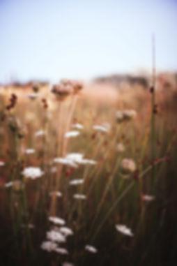 flores-de-duna-1.jpg