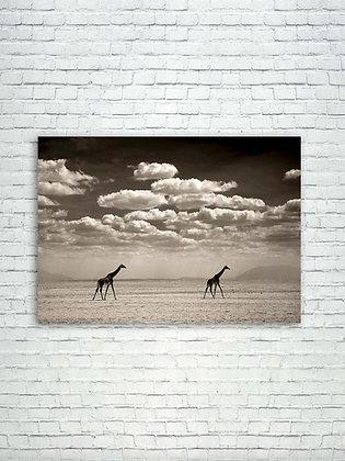 Two giraffes in Amboseli National Park- Kenya