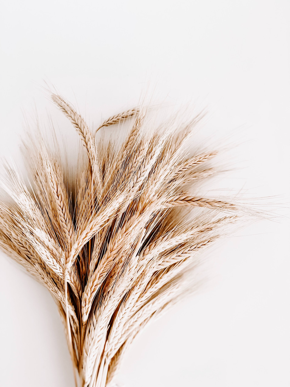 brown-rice-plant-1974627.jpg