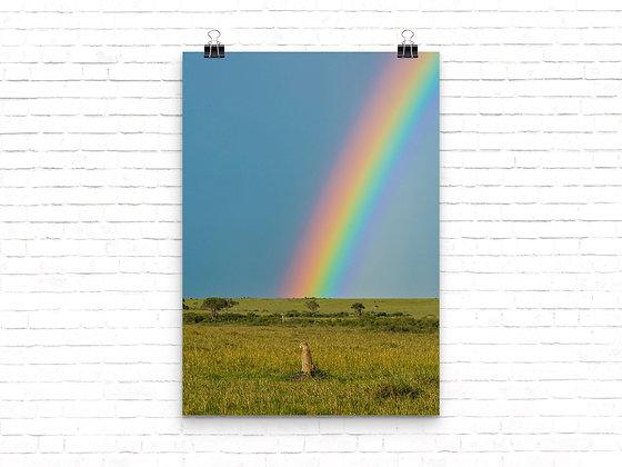 Cheetah in front of a rainbow, Rift valley province, Maasai, Kenya