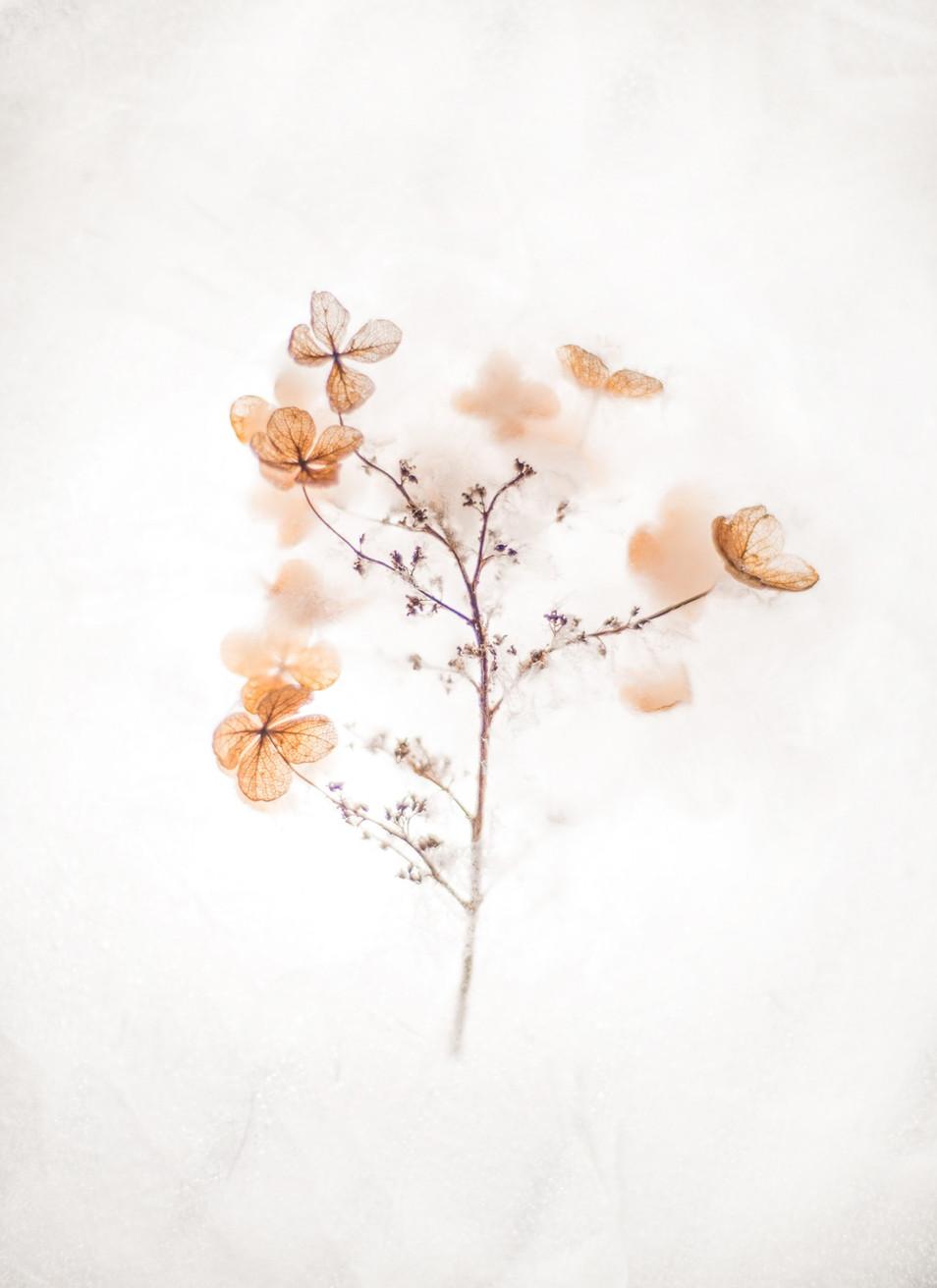 brown-4-petaled-flowers-2395255.jpg