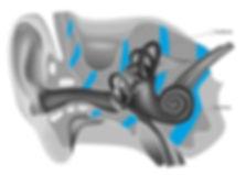 Knochenleitung