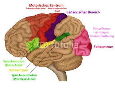 tomatis methode neurostimulation adhs tinnitus burnout schlaganfall autismus
