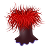 Anemone_edited.png