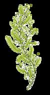 seaweed_edited_edited.png