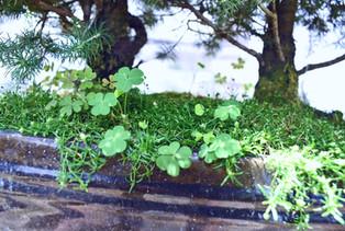 bonsai_edited.jpg