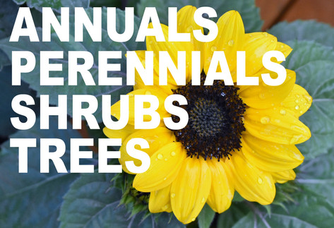 ANNUALS%20PERENNIALS%20SHRUBS%20TREES%20