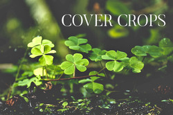 COVER CROPS Directional Image