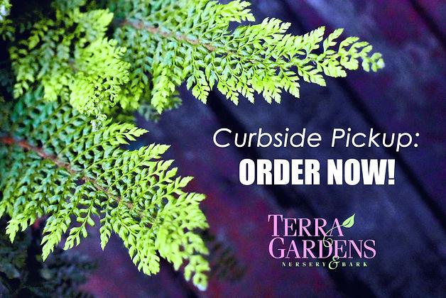 Curbside Pickup ORDER NOW fern.jpg