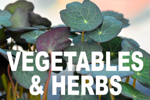 VEGETABLES AND HERBS curbside image.jpg