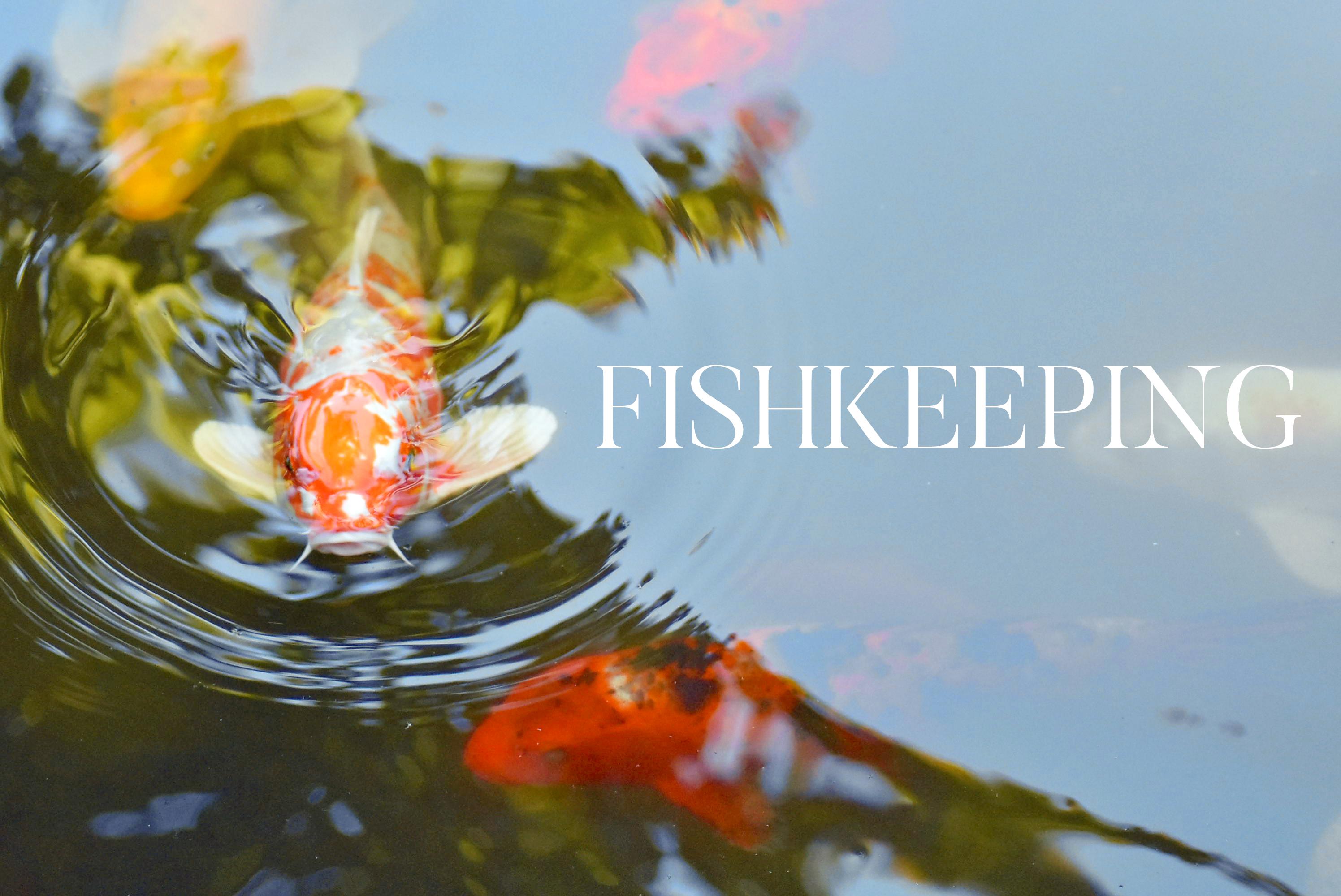 FISHKEEPING website image