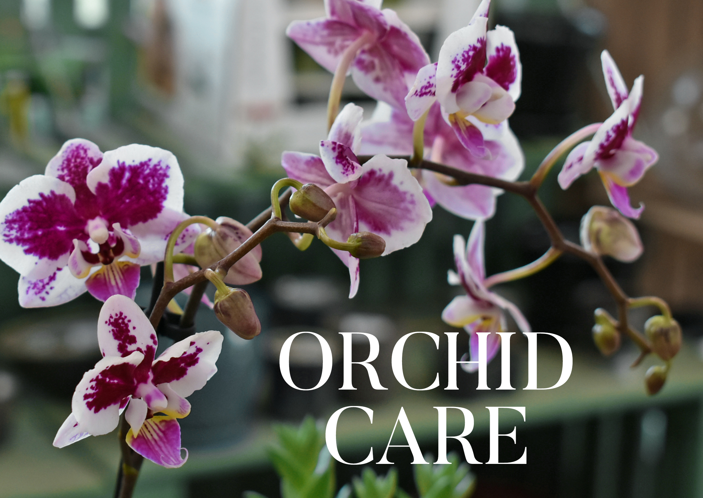ORCHID CARE website image