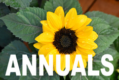 ANNUALS curbside image.jpg