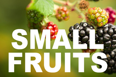 SMALL FRUITS curbside image.jpg