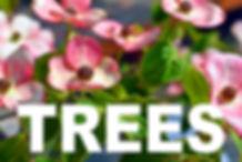 TREES curbside image.jpg