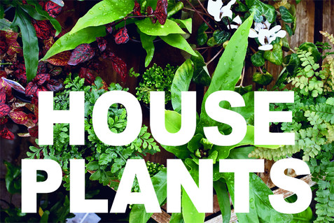HOUSE PLANTS curbside image.jpg
