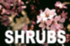SHRUBS curbside image.jpg