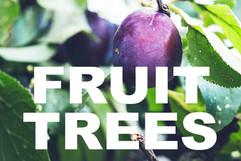 FRUIT TREES curbside image.jpg