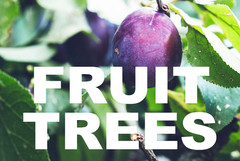 FRUIT TREES curbside image.jpg