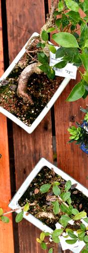 Indoor bonsai table
