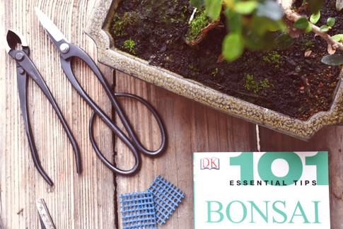 101 Bonsai crop
